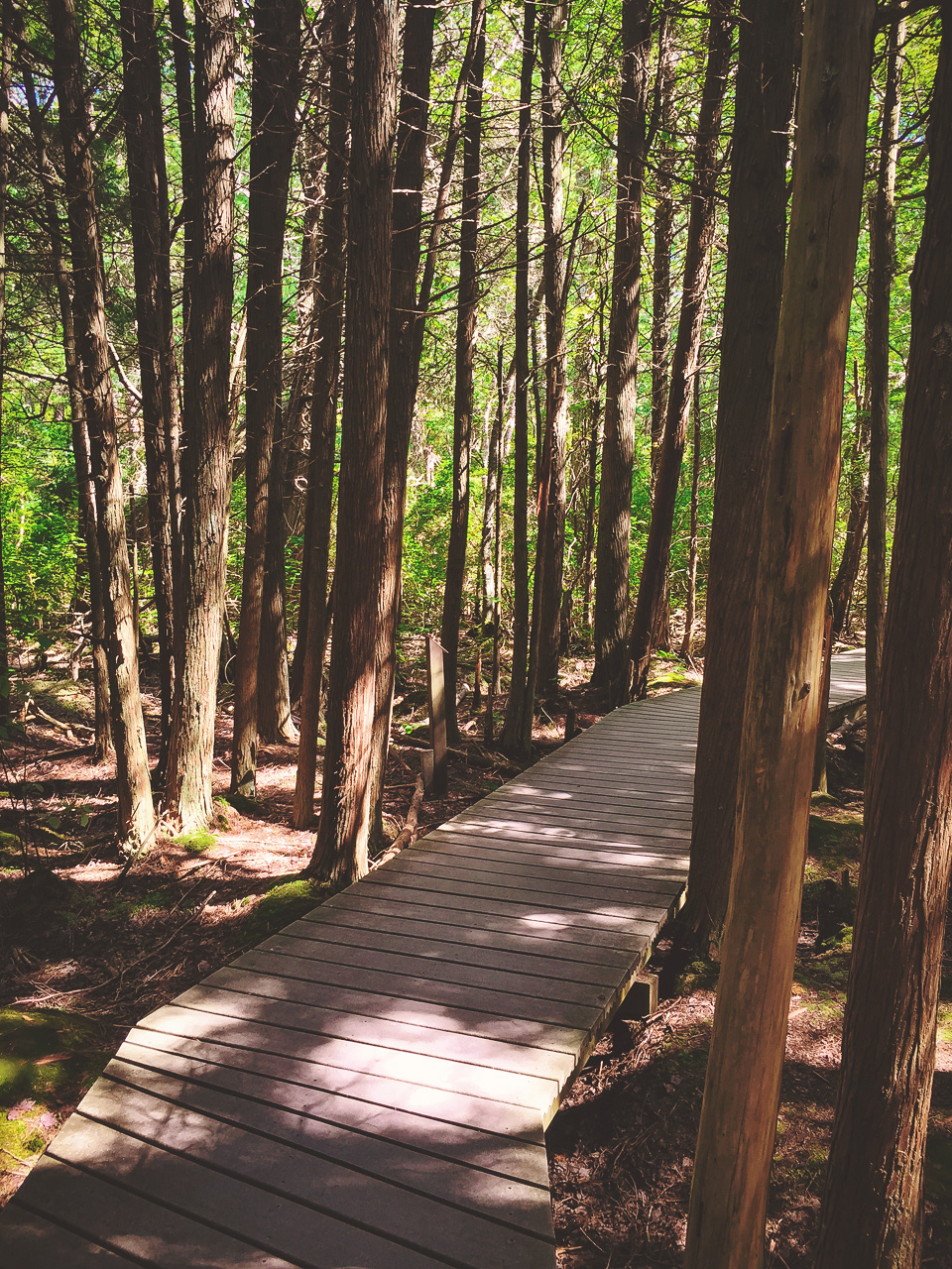 Atlantic White Cedar Swamp Trail in Cape Cod