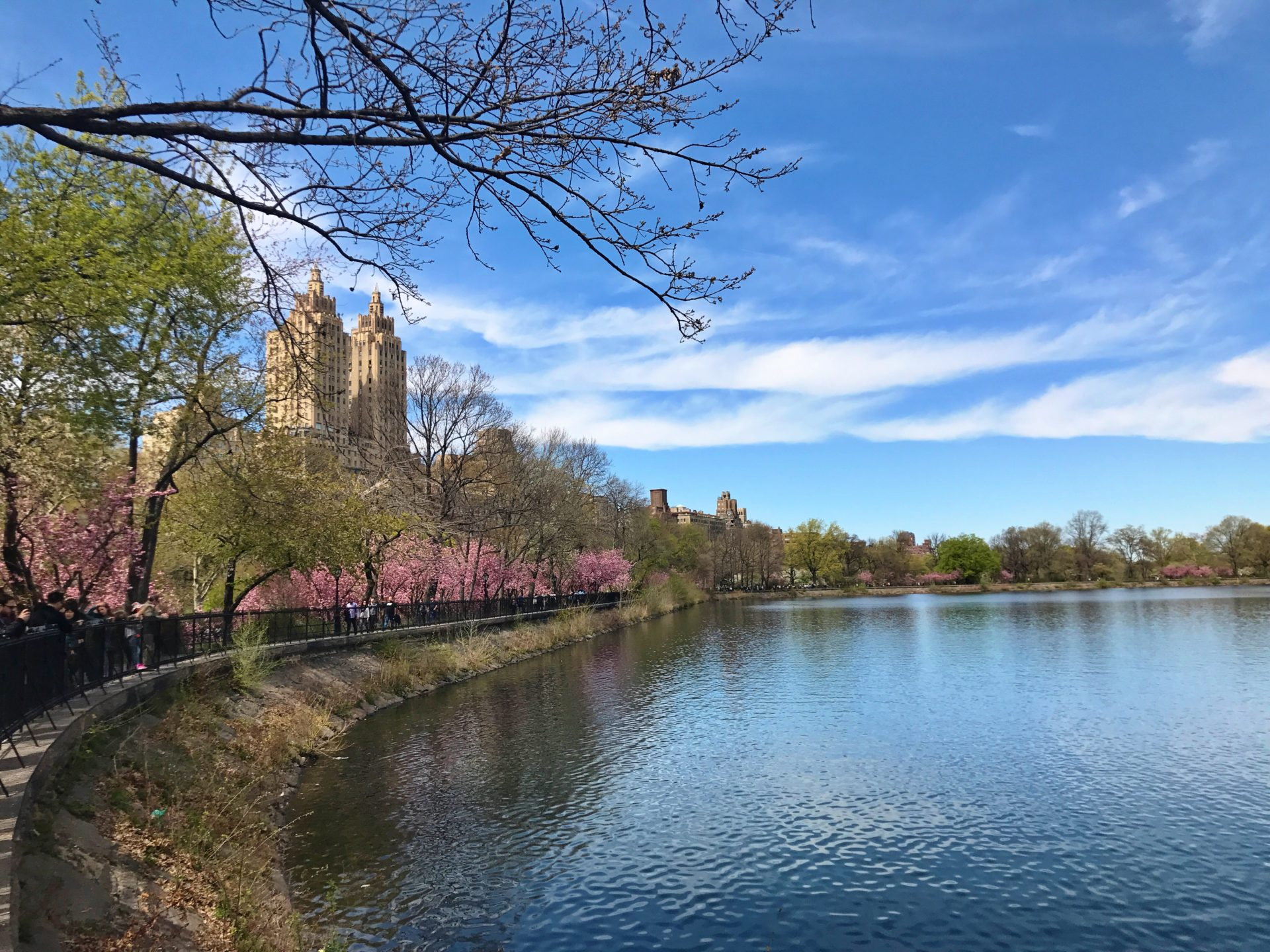 Cherry Blossoms at the Jacquelyn Kennedy Onnasis Reservoir in Central Park